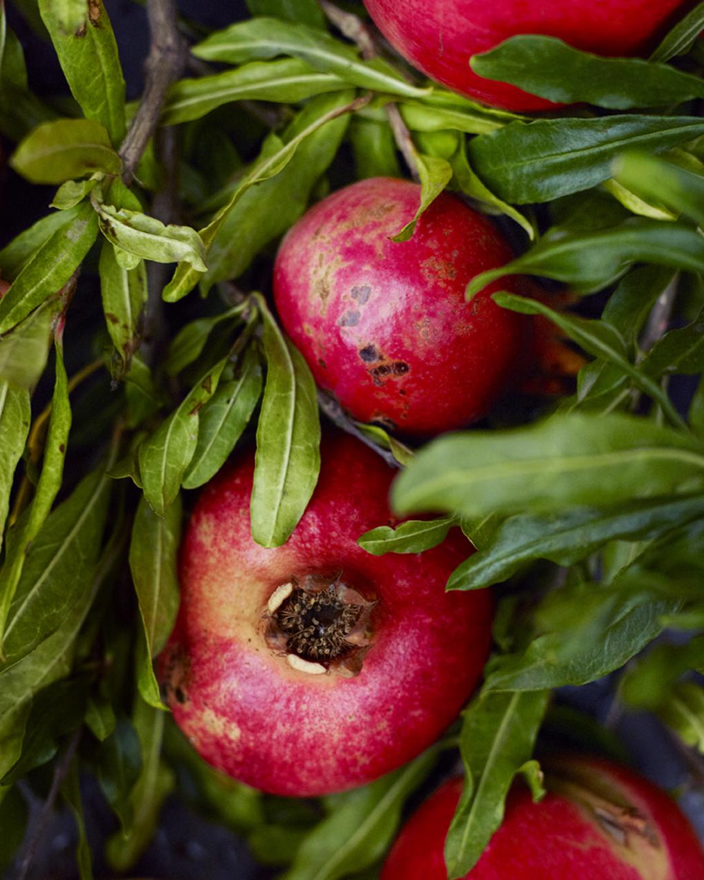 pommegranates-CF054405