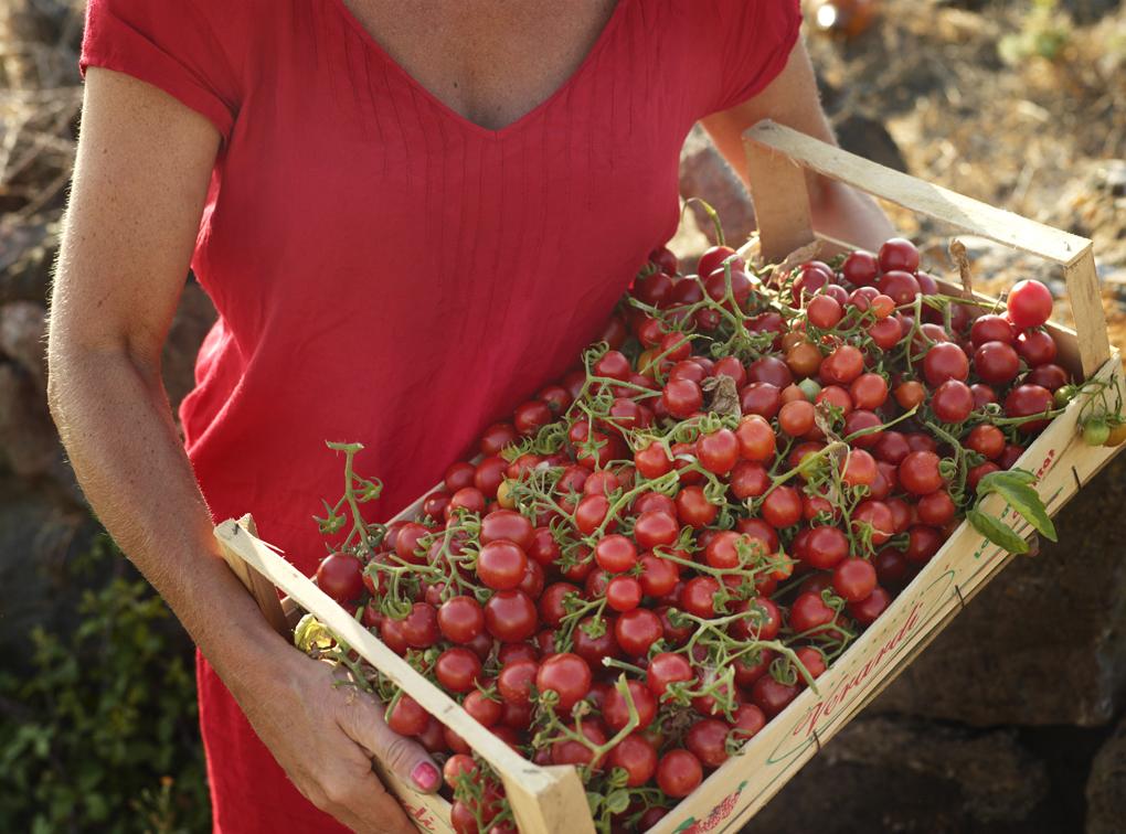 tomatoes-CF080618