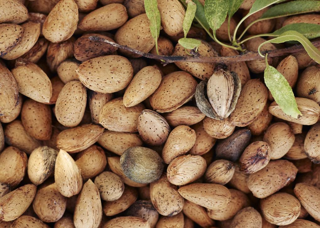 1-Almonds-CF052832