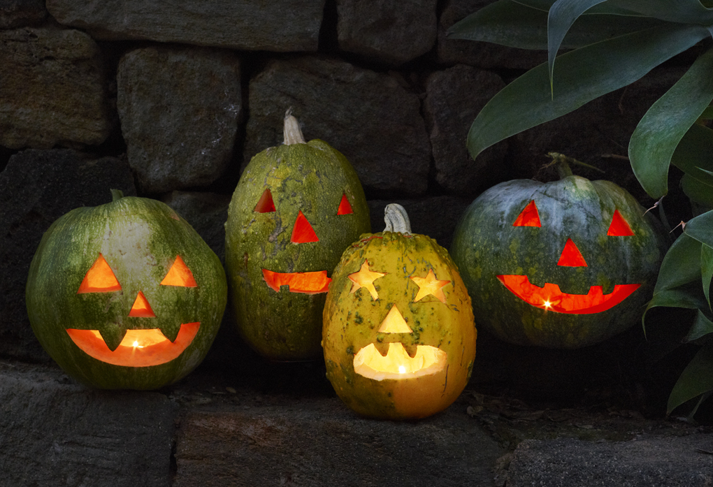 happy halloween CF057618