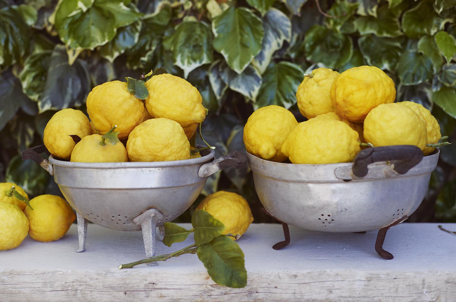 lemons-CF024321
