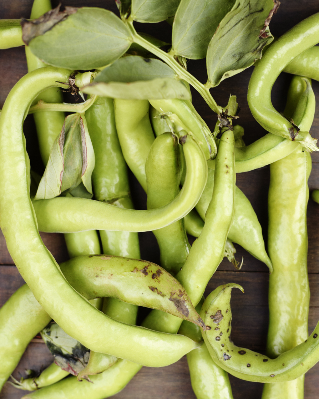 favabeans-CF071834
