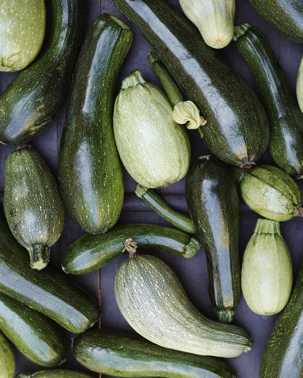 AT-zucchini-CF108454
