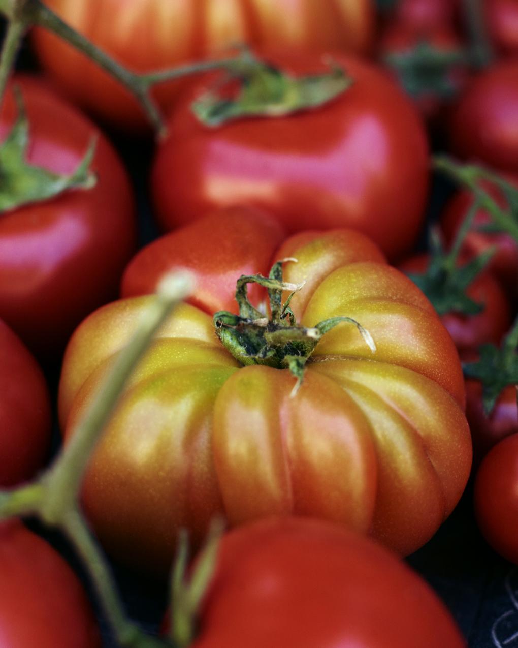 Tomater-CF071298